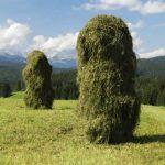 German Hay