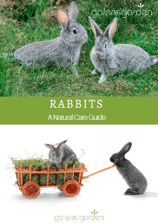 Rabbit Care - PDF