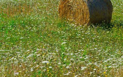 Bale of Alpine hay in meadow