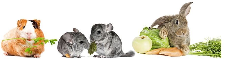 Guinea Pig, Chinchillas, Rabbit with Carrot