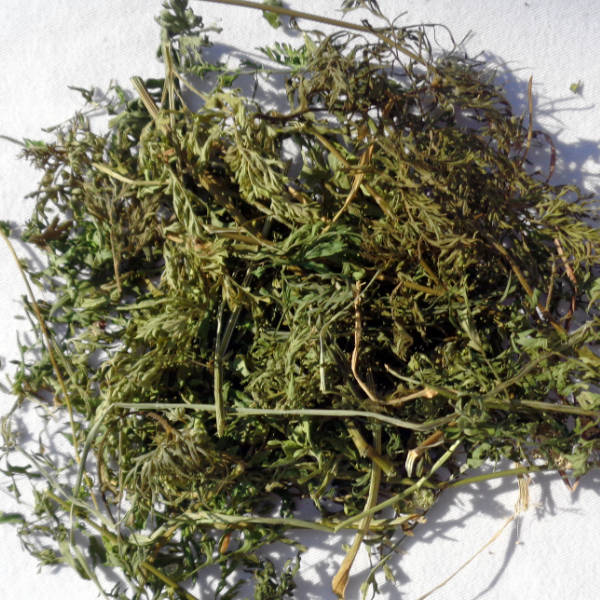 Single Dried Herbs - Carrot Tops 100gm Bag