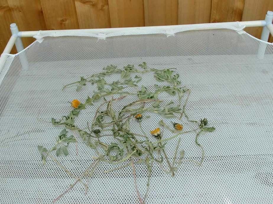 Dried Dandelion & Fenugreek