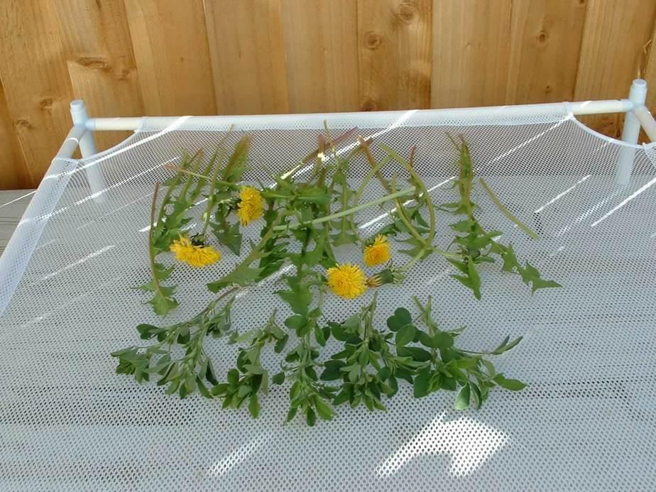 Herb drying on a flat mesh rack