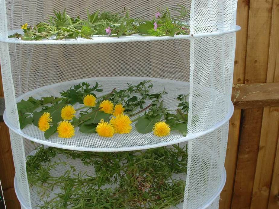 Herb drying in a hanging mesh rack