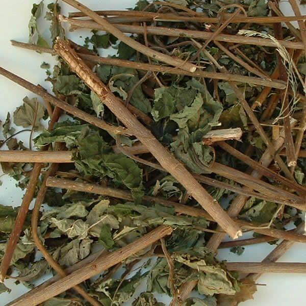 Long hazel twings with leaf