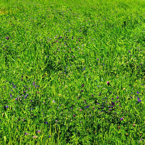 Galen's Garden's Meadow Mixes