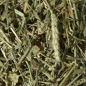 Cereal Grass Forage - Green Oat Forage 1kg Bag