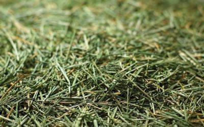 Graze On dried grass