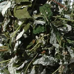 Single Dried Herbs - Raspberry Leaf Stalk 1kg Bag