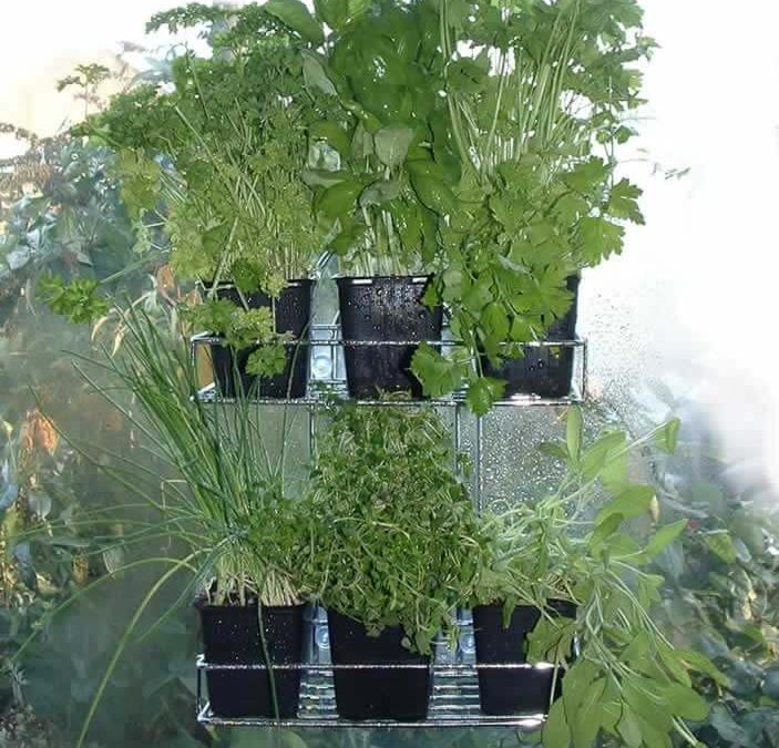 Living Herb Holder from a Bath Rack